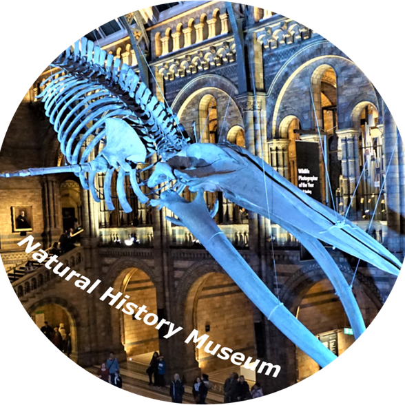 London - Natural History Museum.png